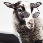 羊タブレット